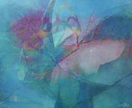 farfalla - by criBo