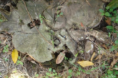 tronco troncato by criBo