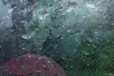 ombrello e foresta pluviale - by criBo