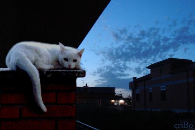 gatto di notte - by criBo