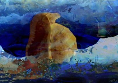 conchiglia - by criBo
