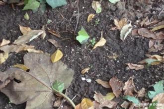 foglie su terreno