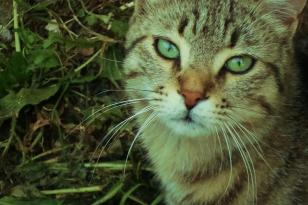 gatto in visita