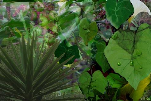 omaggio a Rousseau - mix foto e dipinti by criBo