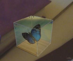 farfalla nella teca - by criBo